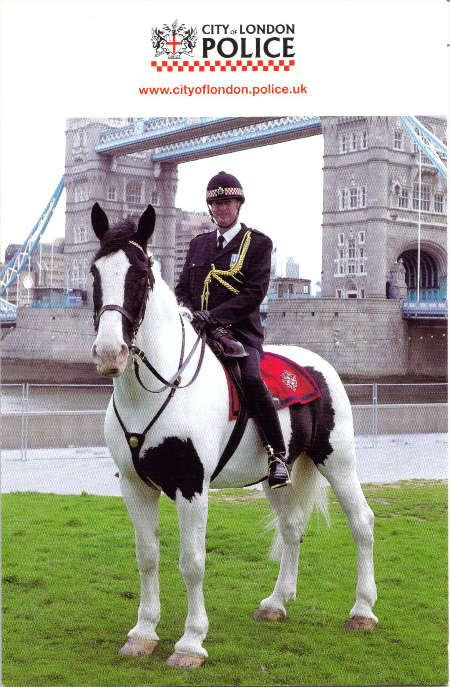 city_of_london_horse_chiropractor