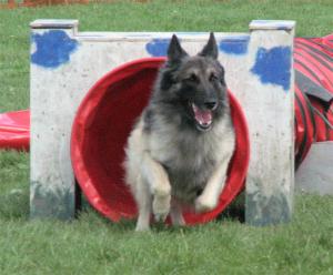 dog_exercise
